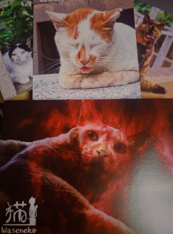 Photo - Waseneko Circle Cat Postcards 201811 (Cat is not on fire)